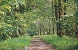 Ontdek de mooie natuur van de Overijsselse oerbossen